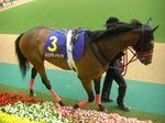 秋華賞の有力馬、レッドディザイア(パドック写真付き)