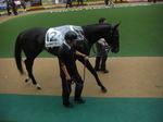 菊花賞の有力馬、リーチザクラウン